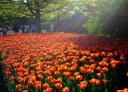 it8217s-tulip-time-in-istanbul-2011-05-04_l