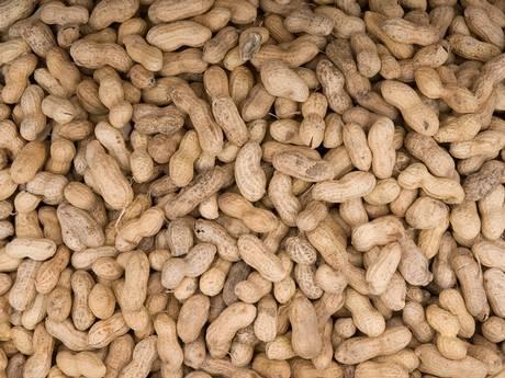 20-Nuts-Get