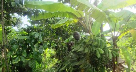 coffee-farmer-joshua-wamukota_-280x150