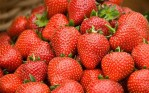 strawberries_2846319b